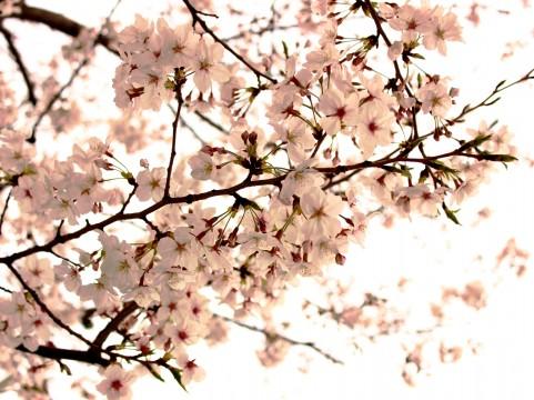 12星座別!4月の新生活、人間関係の悩みを解消