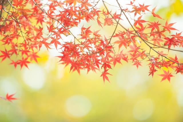 9月_恋愛運